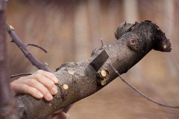 Tree Removal Etobicoke